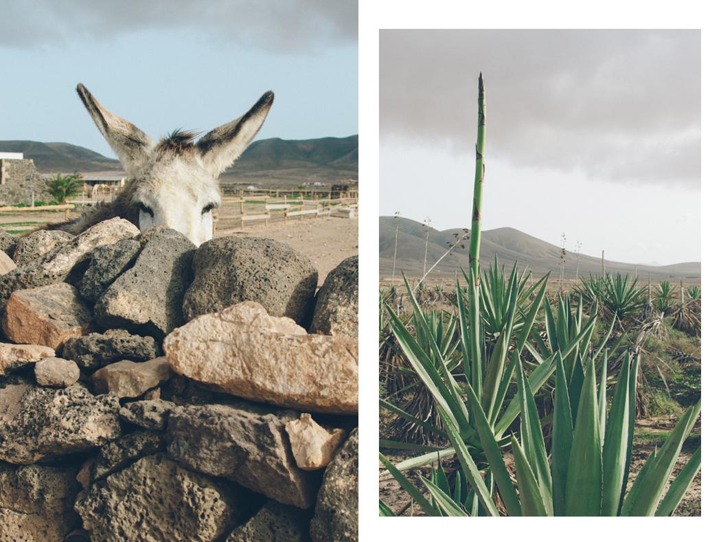 048-Fuerteventura_Urlaub_JuleMueller
